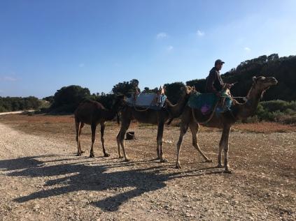 Vu au matin du côté d'Essaouira, à notre réveil