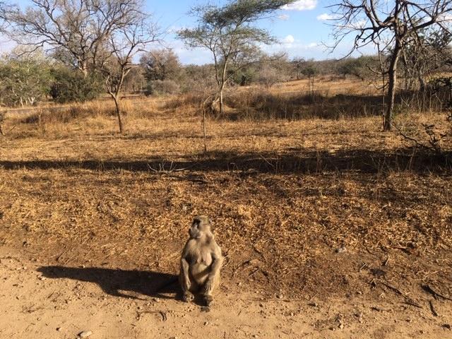4 mois après notre départ d'Afrique du Sud. La boucle de l'Afrique Australe.Kruger et d'autres aventures...
