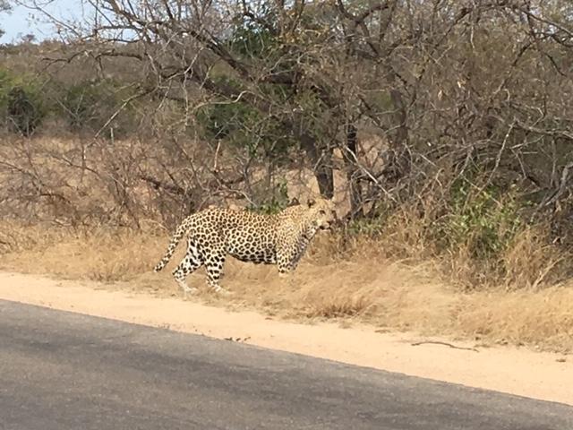 Notre boucle en Afrique Australe est bouclée. Bouquet final avec le Kruger National Park et d'autres aventures plus ou moins drôles...